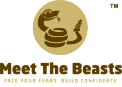 [Face Your Fears, Building Confidence, Strengthening Teams for Businesses - Meet The Beasts for Business]